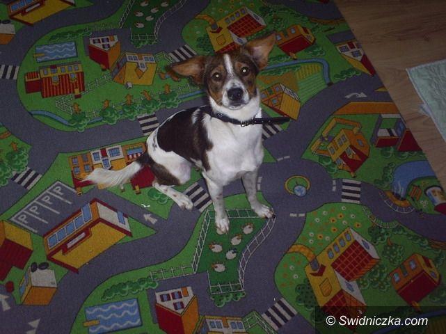 Strzegom: Znaleziono psy