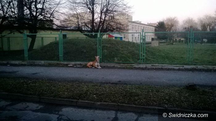 Świdnica: Przywiązał psa do płotu i zniknął