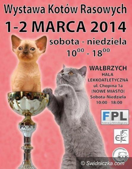 Wałbrzych: Międzynarodowa Wystawa Kotów Rasowych – 1 – 2 marca