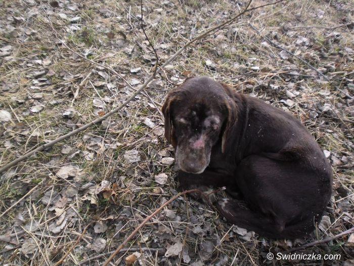 Świdnica: Poszukiwany właściciel czworonoga przywiązanego do drzewa