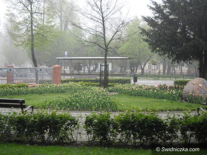 Świdnica: Przyłapana na kradzieży tulipanów