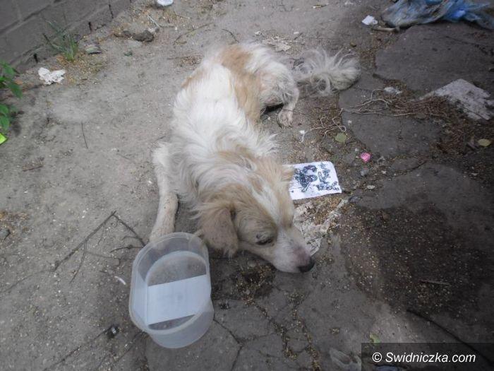 Świdnica: Kolejny porzucony pies, tym razem znaleziony w pojemniku na śmieci!
