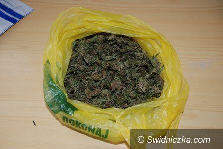 Świdnica: Posiadał w mieszkaniu 320 porcji marihuany