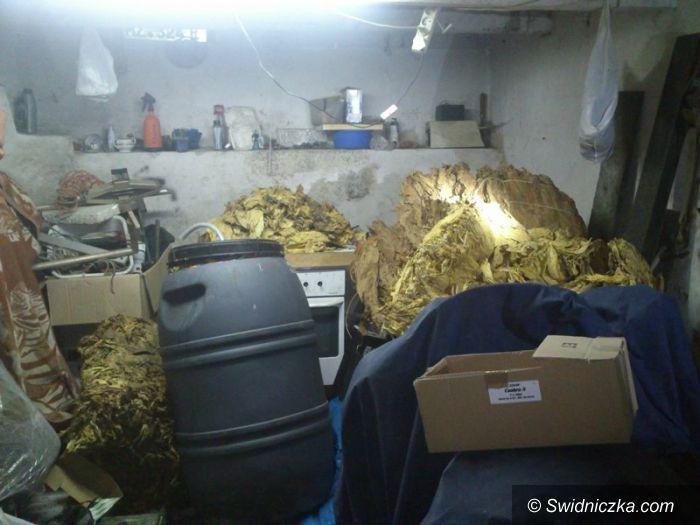 Strzegom: 130 litrów garażówki, nielegalny tytoń i papierosy