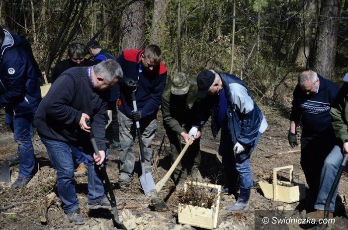 Bojanice: 70 drzew na 70–lecie lasów państwowych
