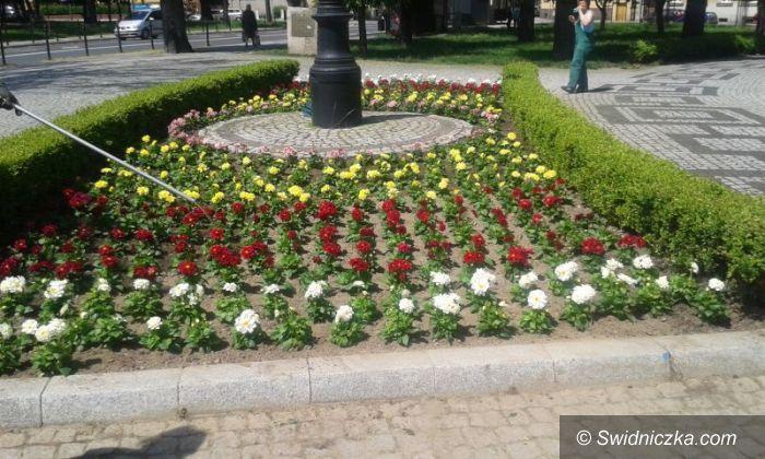 Świdnica: Tysiące kwiatów i roślin zazieleni Świdnicę
