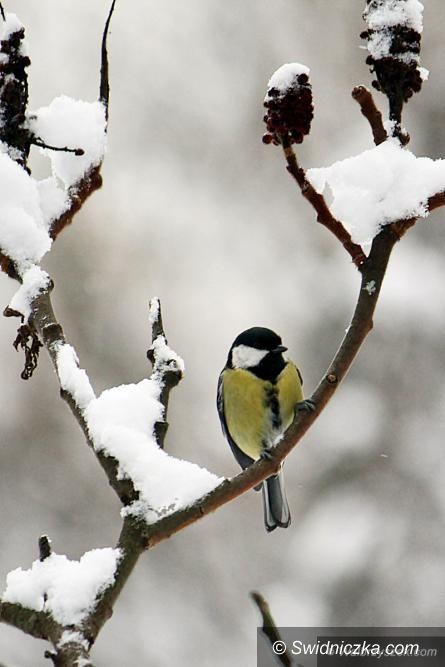 Świdnica: Zima w obiektywie