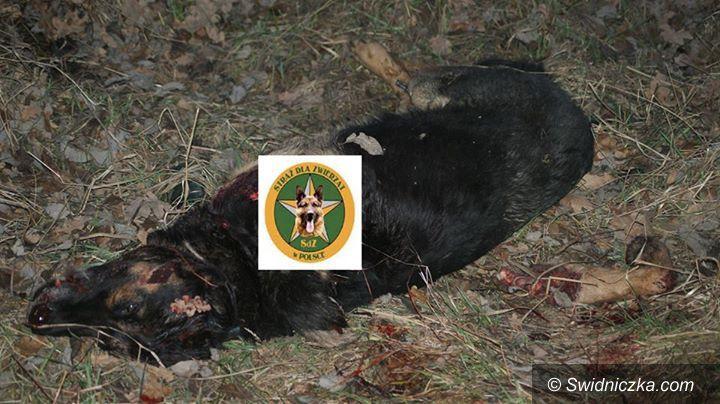 Wałbrzych: Wałbrzych: Poszukujemy sprawcy bestialskiego morderstwa psa