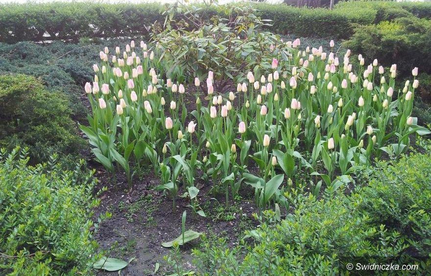 Świdnica: Kwiaty w przeprosiny