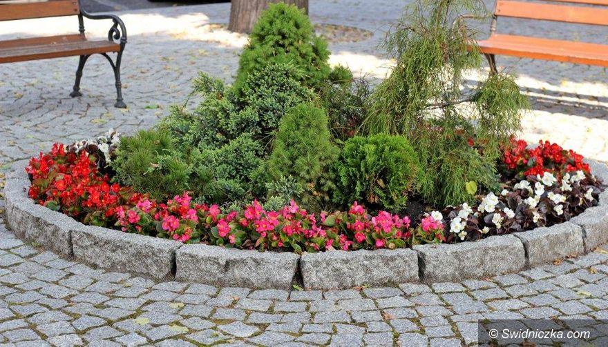 Dobromierz: Kolejne nasadzenia kwiatów