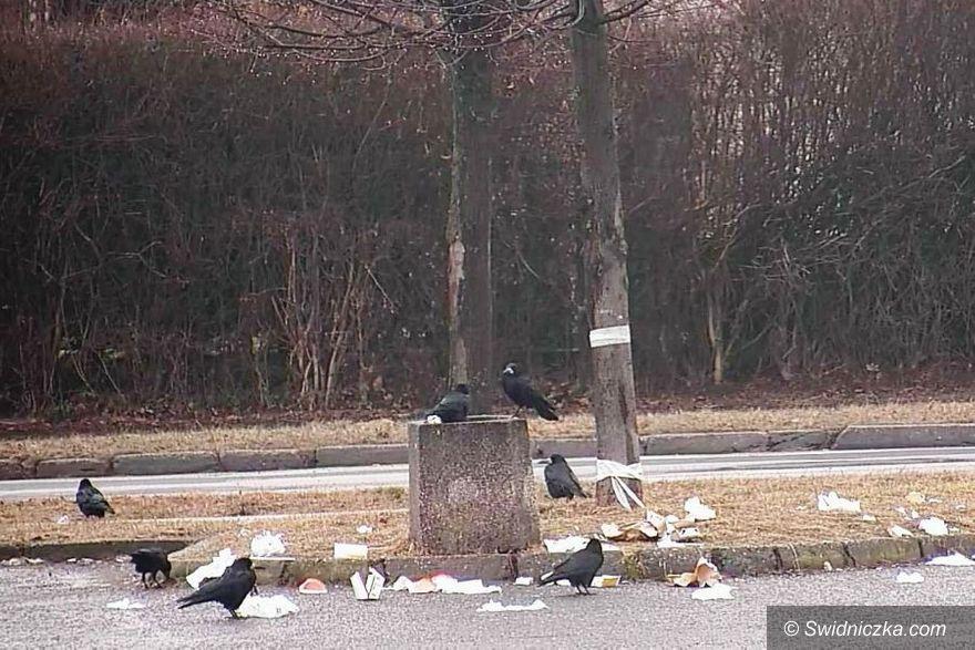 Świdnica: Nie tylko ludzie śmiecą, czyli ptasi bufet