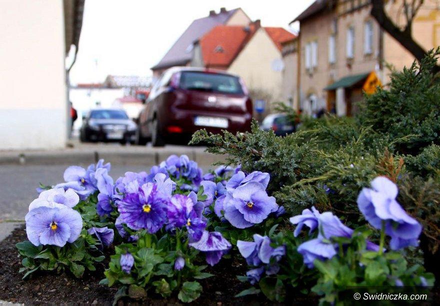 Dobromierz: Wiosenne nasadzenia w gminie Dobromierz
