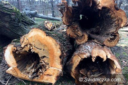Świdnica: Stanowisko Urzędu Miejskiego w Świdnicy w sprawie wycinki drzew w Parku Centralnym