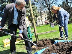 Świdnica: Setki drzew i tysiące krzewów nasadzonych zostanie w Świdnicy