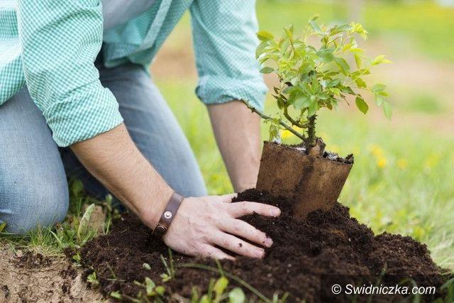 Żarów: Przyszła wiosna – drzewa posadzone