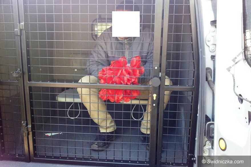 Świdnica: Sezon na tulipany