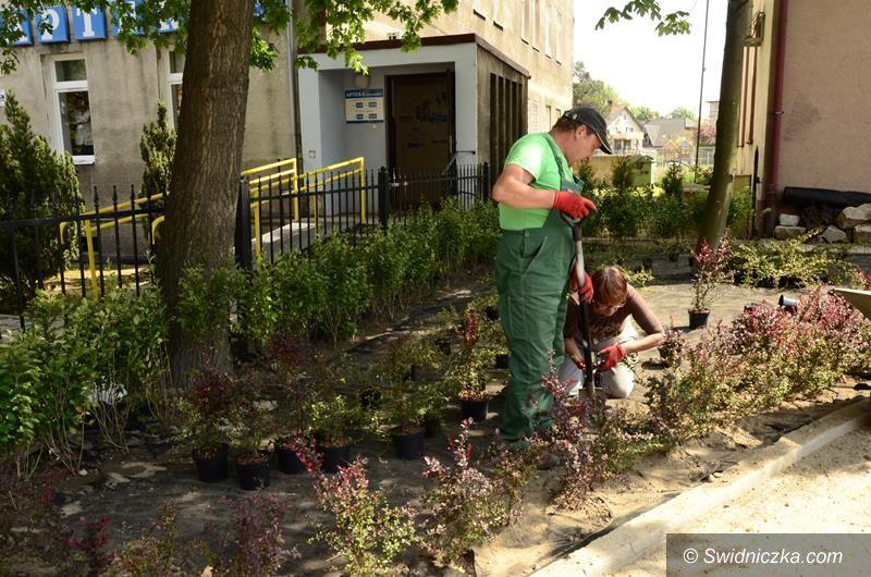 Żarów: W Żarowie przybywa zieleni i kwiatów
