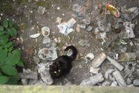Świdnica: Na pomoc kotu