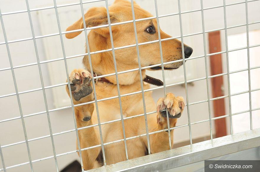 Świdnica: Schronisko dla bezdomnych zwierząt podsumowuje pół roku działalności