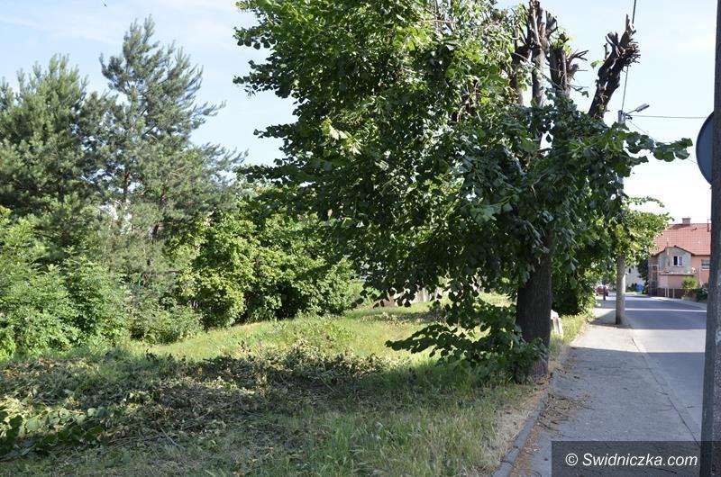 Żarów: Zniszczyli drzewa. Będą kary