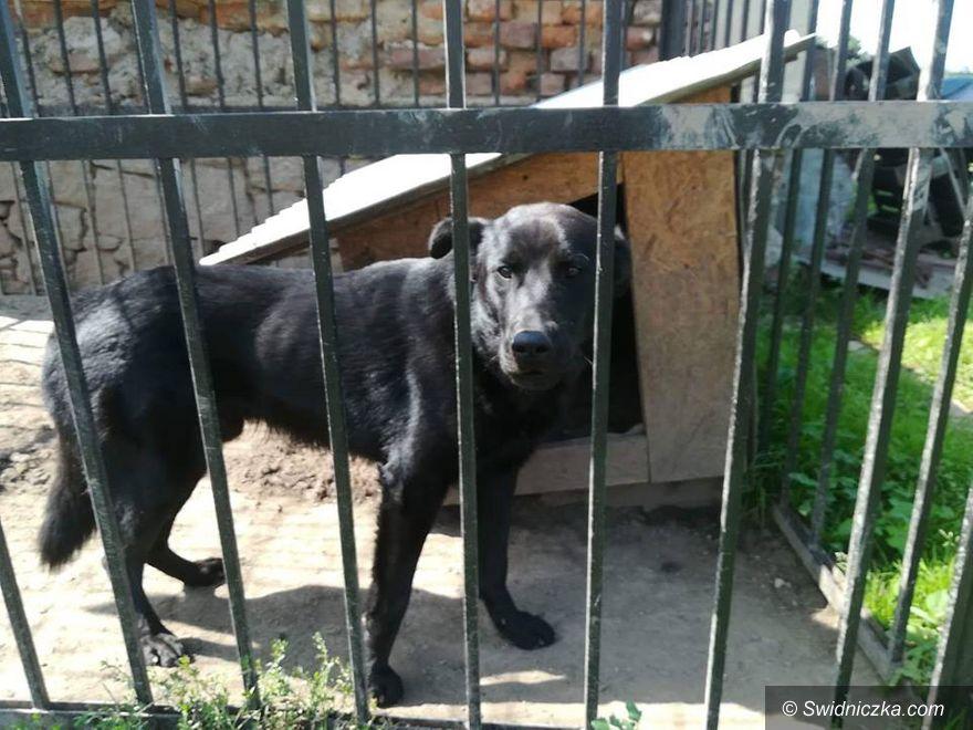 Świebodzice: Interweniowali w Świebodzicach – odebrali psa