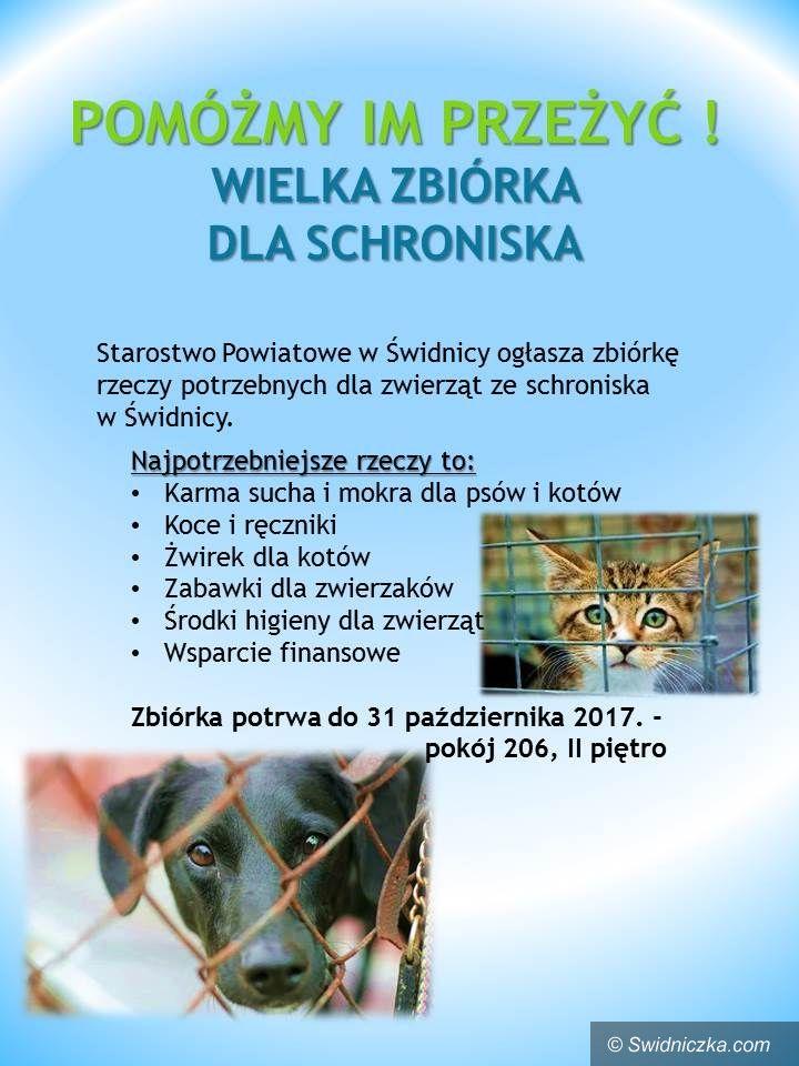 Świdnica/powiat świdnicki: Wielka zbiórka dla zwierzaków