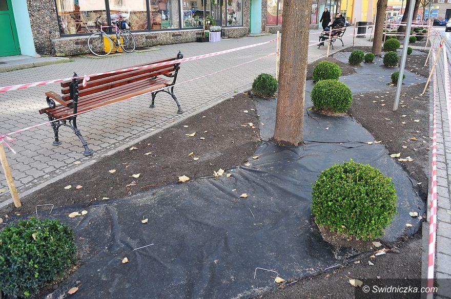 Świdnica: Nowe zieleńce przy ul. Bohaterów Getta