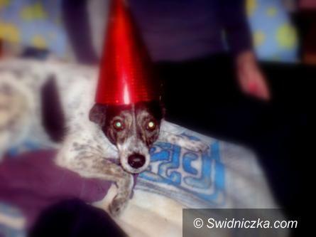 Świdnica/REGION: Pieski Sylwester– rady dla właścicieli czworonogów