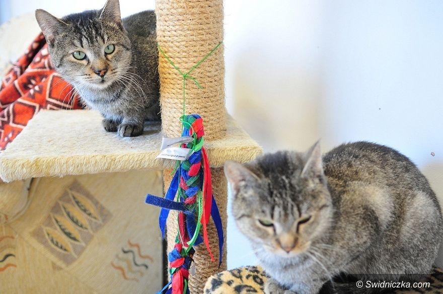 Świdnica: Aktywny rok w schronisku dla zwierząt