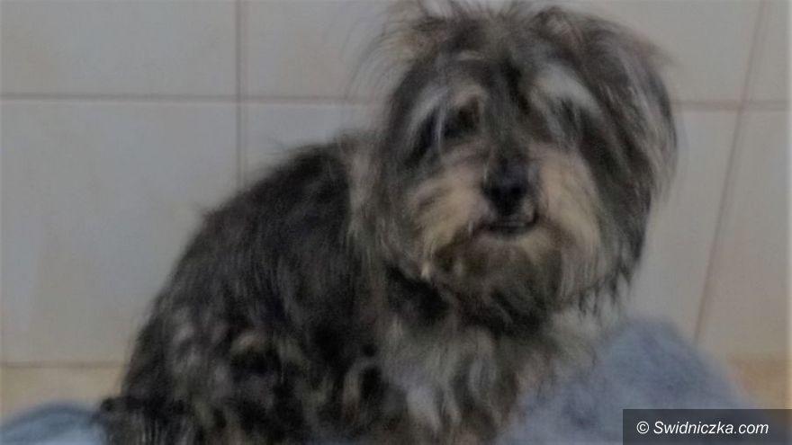 Świdnica: Pies uwolniony z pułapki