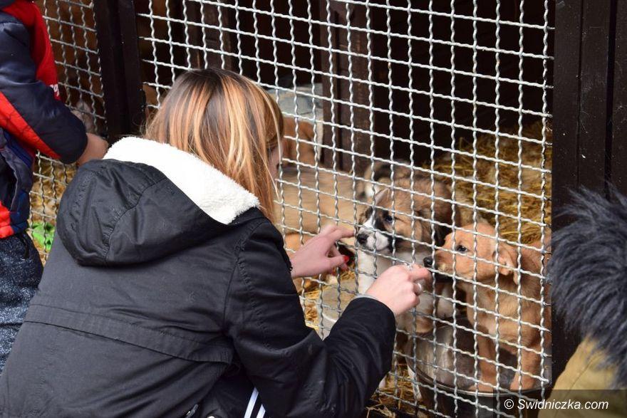 Gmina Żarów: Jak pomóc zwierzętom bezdomnym?