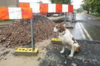 Świdnica: Pies uciekł, właściciel poniósł konsekwencje