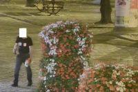 Świdnica: Kwiaty w cenie