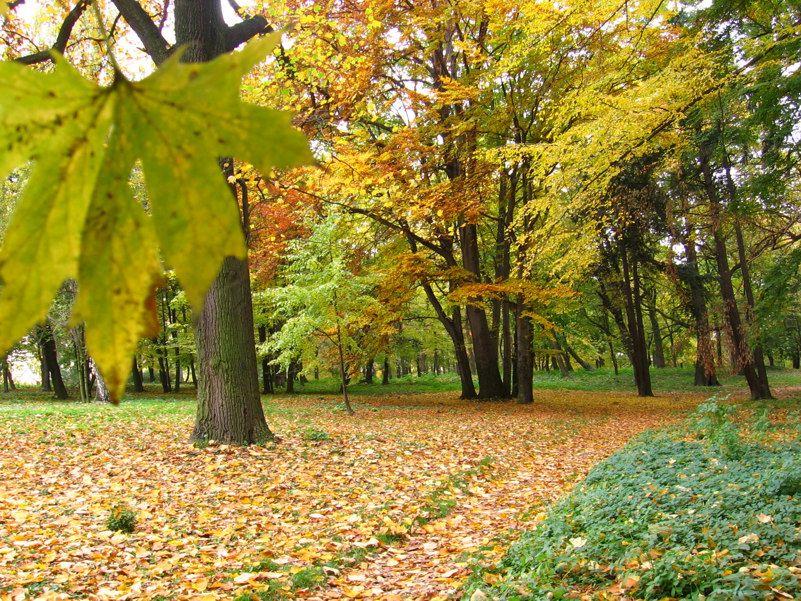 Żarów: Dbają o zabytkowy Park