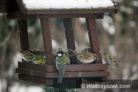 REGION: Zimowe dokarmianie ptaków