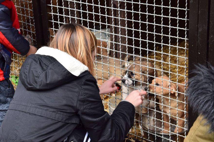 Gmina Żarów: Jak pomóc zwierzętom bezdomnym – ważne informacje