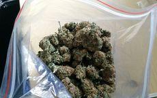 Świebodzice: Twierdzi, że marihuanę trzymał na własny użytek