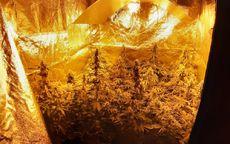 Świdnica: Dzielnicowi zlikwidowali domową plantację marihuany