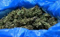 Świebodzice: Sporo narkotyków trzymał w mieszkaniu