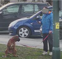 Świdnica: Można dostać mandat za psie odchody