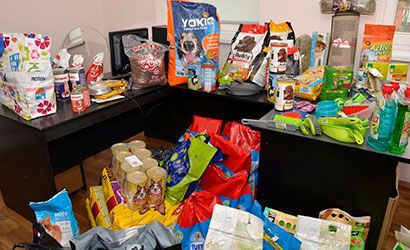 Żarów: Zbieramy dary dla bezdomnych zwierząt