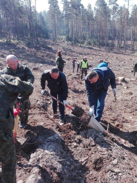 Gmina Marcinowice: Społeczne sadzenie lasu