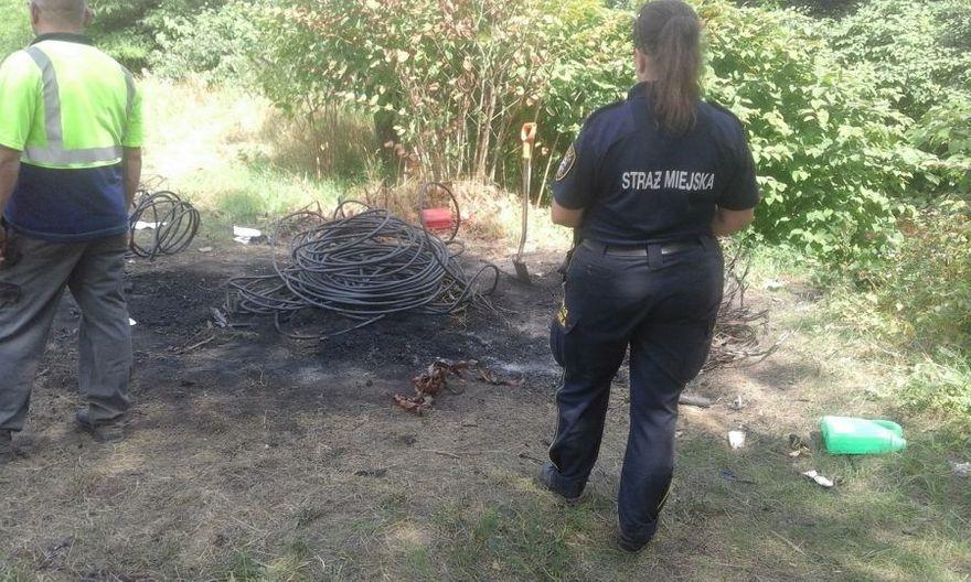 Świdnica: Opalali kable