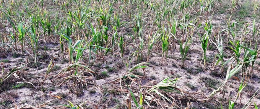 REGION: Pomogą rolnikom