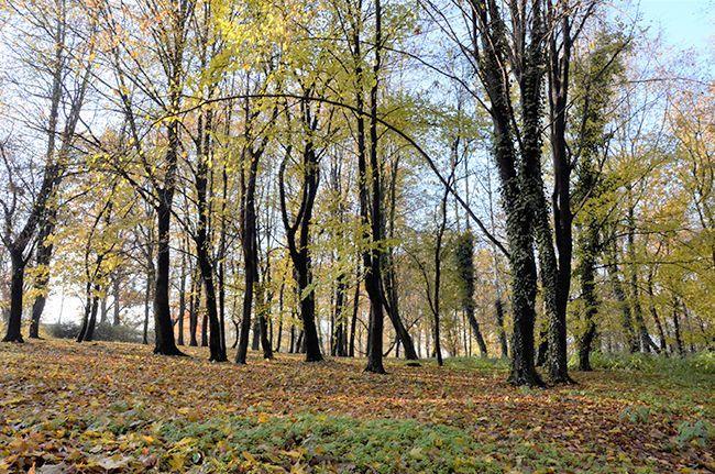 Żarów: Łąki kwietne