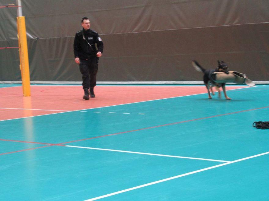 Świdnica: Policyjny pies w szkole