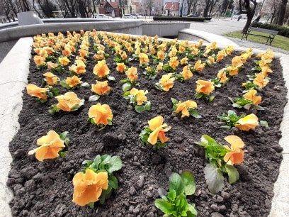 Świdnica: Wiosenna Świdnica
