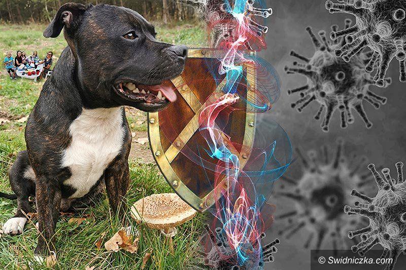 Świat: Pies w domu jest lekiem na koronawirusa?