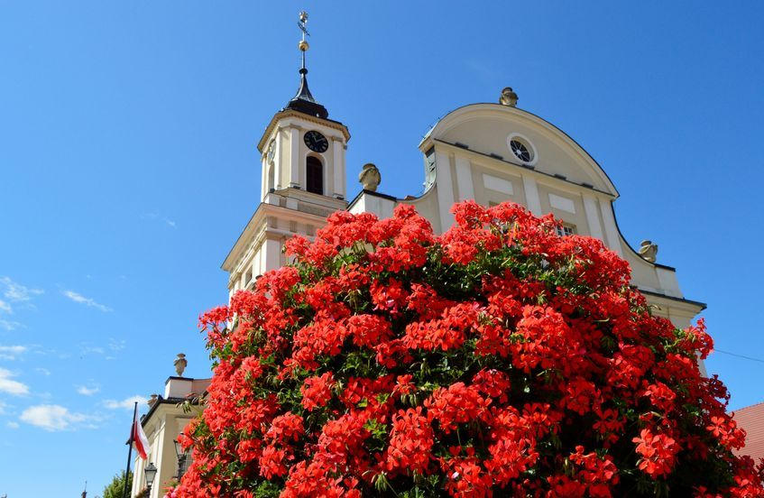 Świebodzice: Miasto w kwiatach