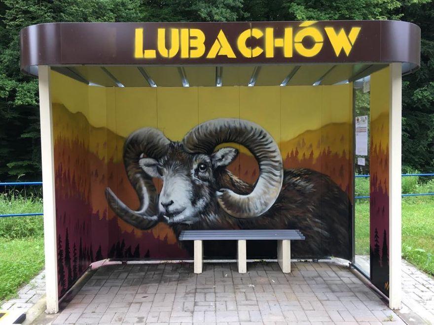 Lubachów: Muflon wita